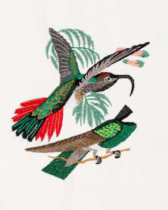 Bfc large haeckels hummingbird fantasy