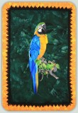 BFC1060 Large Blue and Gold Macaw