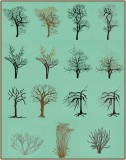 BFC1614 Flora - Bare Trees in Winter