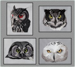 BFC1564 Four Black and White Owl Portraits