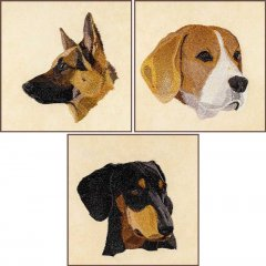 BFC1621 Three Dog Portraits