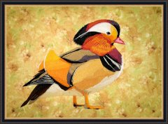 BFC1778 Large Mandarin Duck