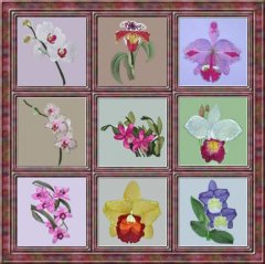 BFC0303 Watercolor Orchids