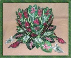 BFC0322  Lace Bowl & Doily  Caladium