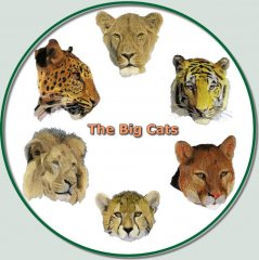 BFC0584 The Big Cats