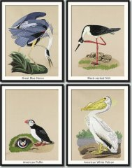 BFC0923 Audubon Water Birds by the Dozen