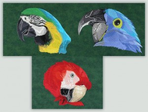 BFC1046 Three Parrot Portraits