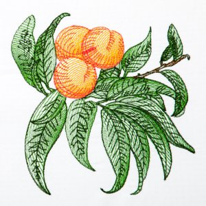 BFC1350 Botanical Fruit Woodcuts Quilt Blocks