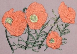 BFC0237 Poppies