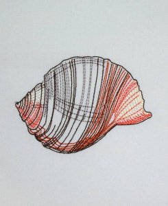 BFC0632 Color Sketches Shells 04