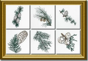 BFC0642 Color Sketches-Evergreens