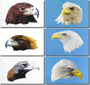 BFC0680 Portraits-Eagles