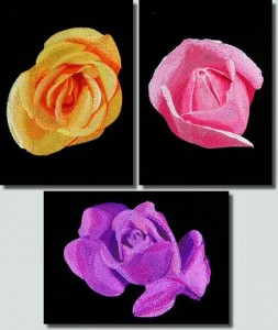 BFC0764 Roses