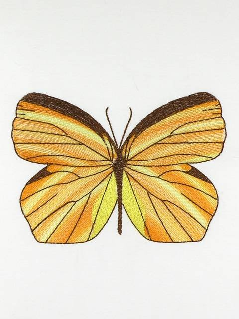 BFC1120 Variegated Fun Butterflies