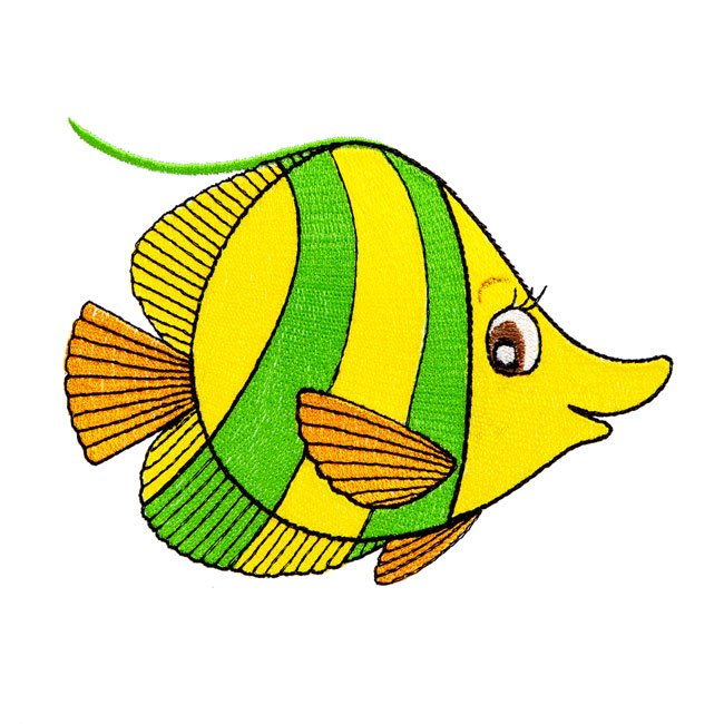 Angie Angel Fish