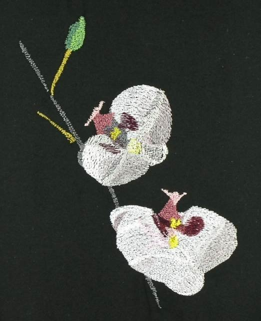 BFC0833 Orchids