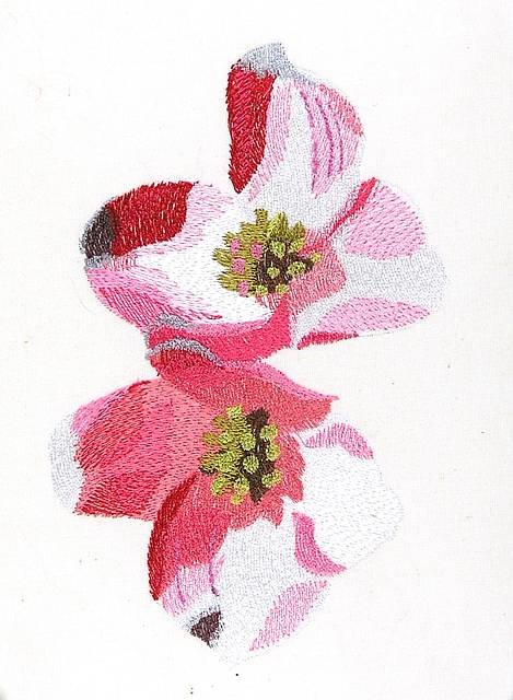 BFC0866 Cherry and Dogwood Blossoms
