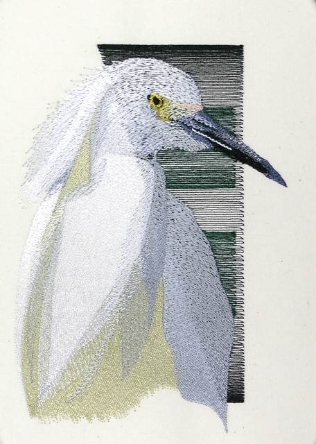 BFC0889 Portraits-Egrets and Herons