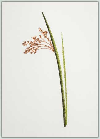 Small Pampas Type Grass